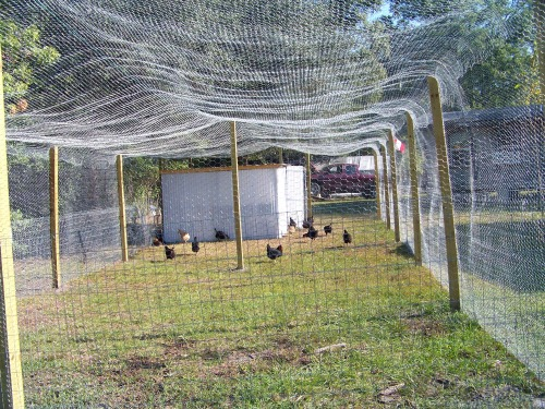 Critter safe and Hawk Free Pen